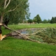 Fallen Tree at Rose Creek due to Thunderstorm